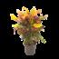 Croton Mammi vertakt