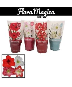 Flora Magica - Ridderster