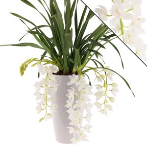 "Cymbidium Ice Cascade"" 3-4  in sierpot wit"