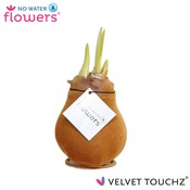 Amaryllis No Water Flowers Velvet Touchz®