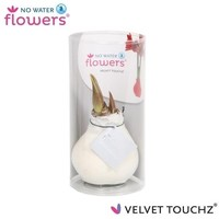 Amaryllis No Water Flowers Velvet Touchz® - in kokor