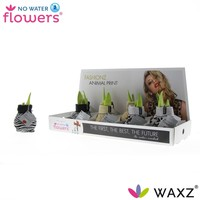 Amaryllis Kein Wasser Flowers® Fashionz Tierdruck