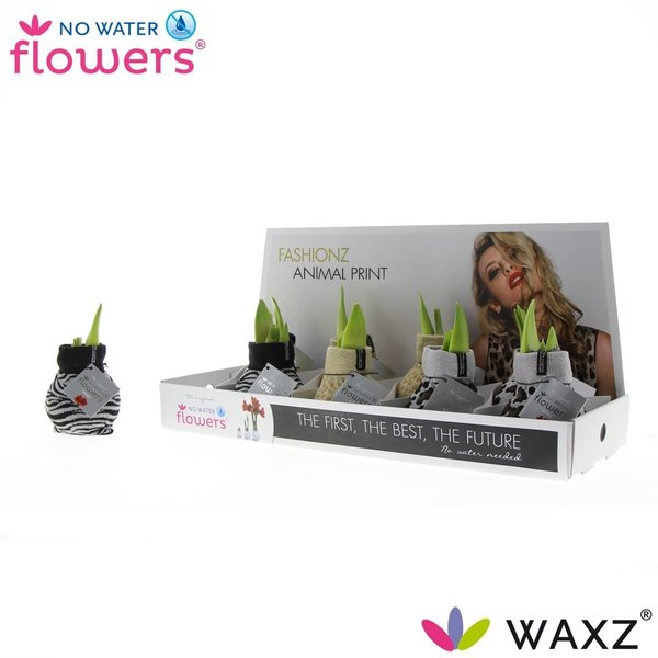 Amaryllis No Water Flowers® - Imprimé animalier Fashionz