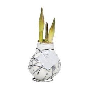 Amaryllis Pas de fleurs d'eau Waxz® Art Vermeer
