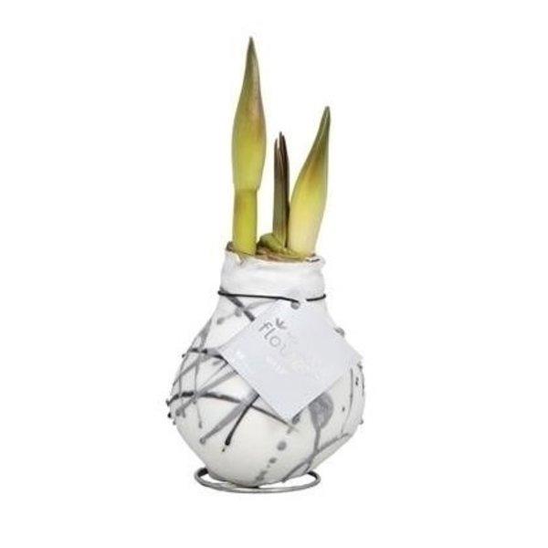 Amaryllis Kein Wasser, Blumen Waxz® Kunst Vermeer