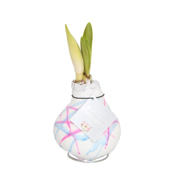 Amaryllis No Water Flowers Waxz® Art Karel Appel