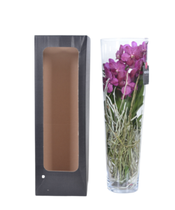 Lisanne in Glas 70 cm rosa