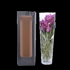 Vanda Lisanne in glass 70 cm pink