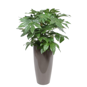 Fatsia Japonica ornamental pot water meter L