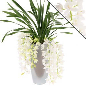 Cymbidium Ice Cascade pot silver - 5-7 flower sprays