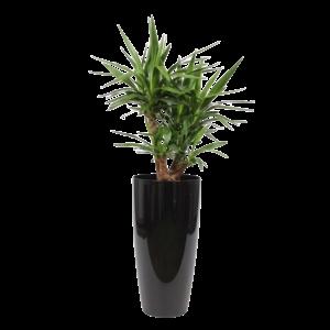 Yucca vertakt, sierpot + watermeter L