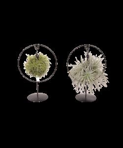 Magic Ball - Ring (Design Duo)