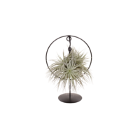 Tillandsia Design Ring Silber