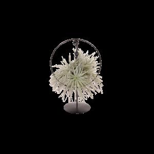 Tillandsia Design Ring Silver