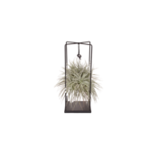 Tillandsia Design Silber