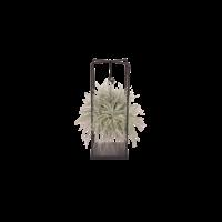 Tillandsia Design Silver