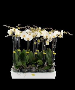 2 branche grand blanc fleuri