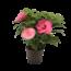 "Hibiscus XXL pink ""Pink"""