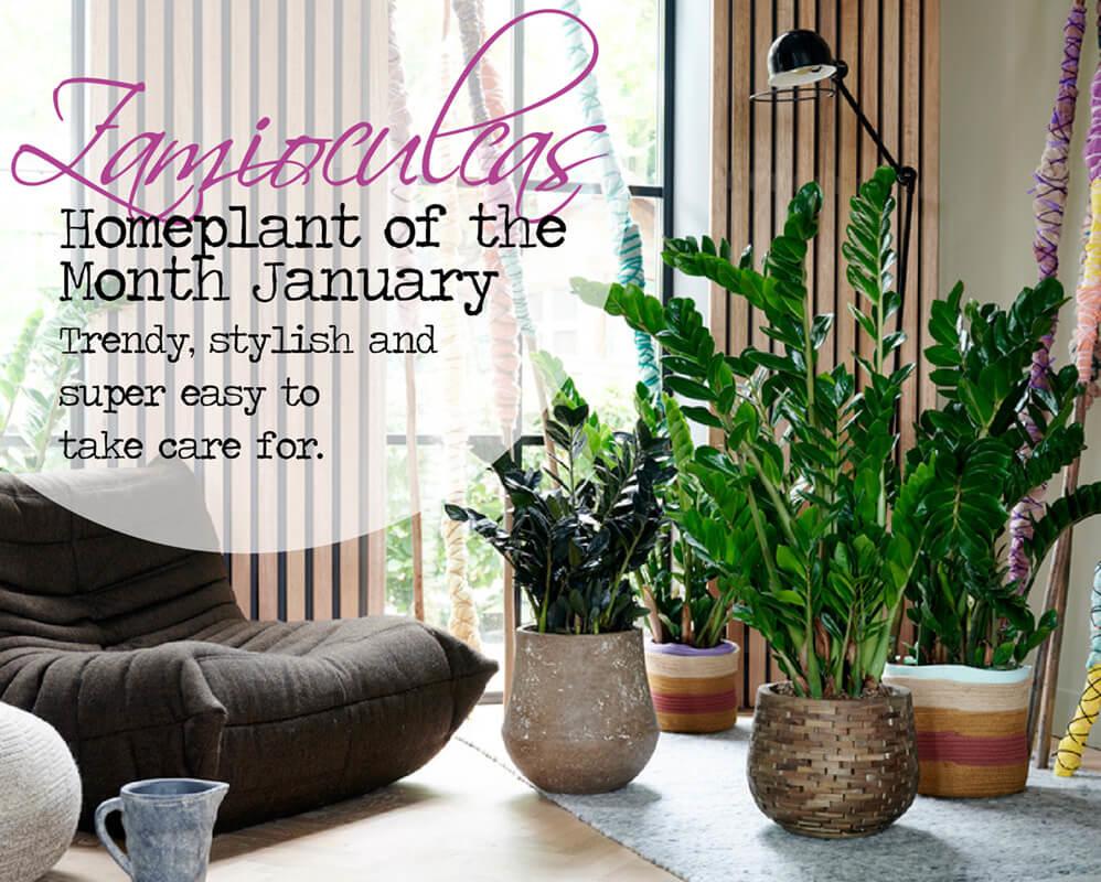 Höchster Qualität Pflanzen Kaufen! banner 1