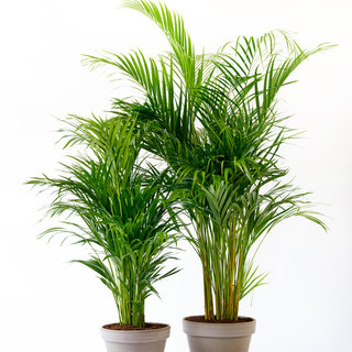 Houseplant of the month