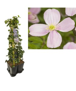 Privacy 5-pack klimplanten