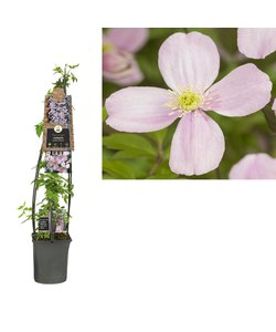 montana rubens 3.0 - à petites fleurs