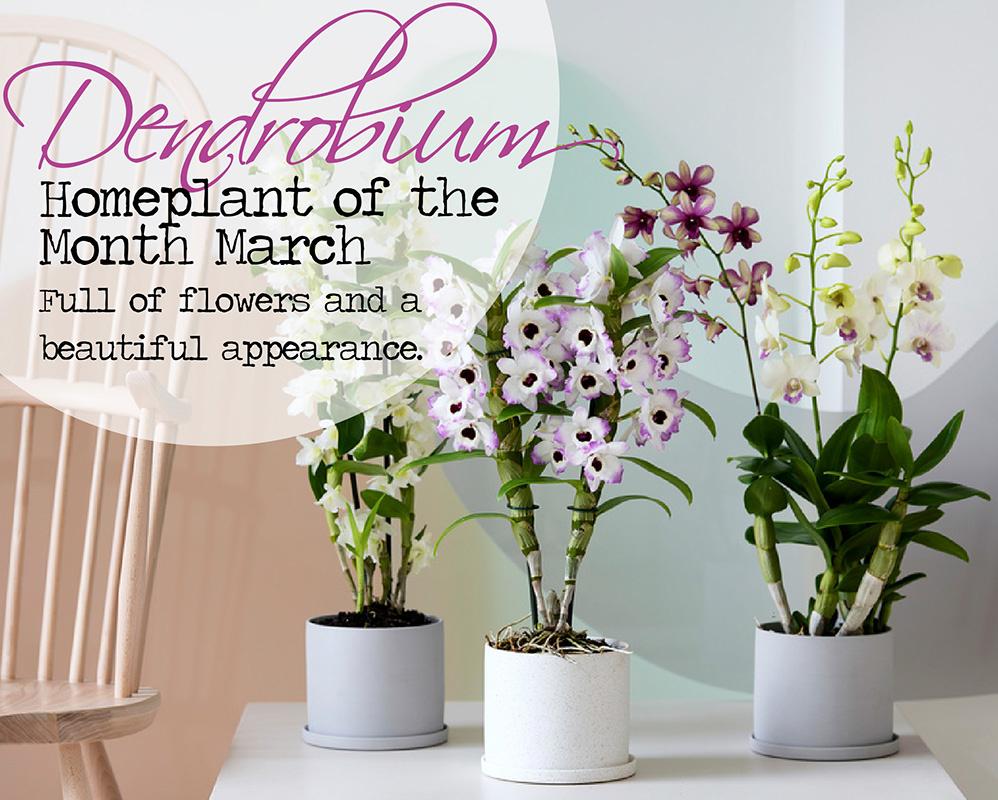 Buy best quality plants online! banner 1