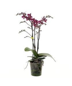 Nano 3 branches de fleurs