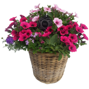 Hanging Basket in rattan basket