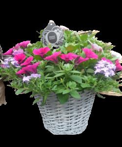 Hanging Basket in gray basket