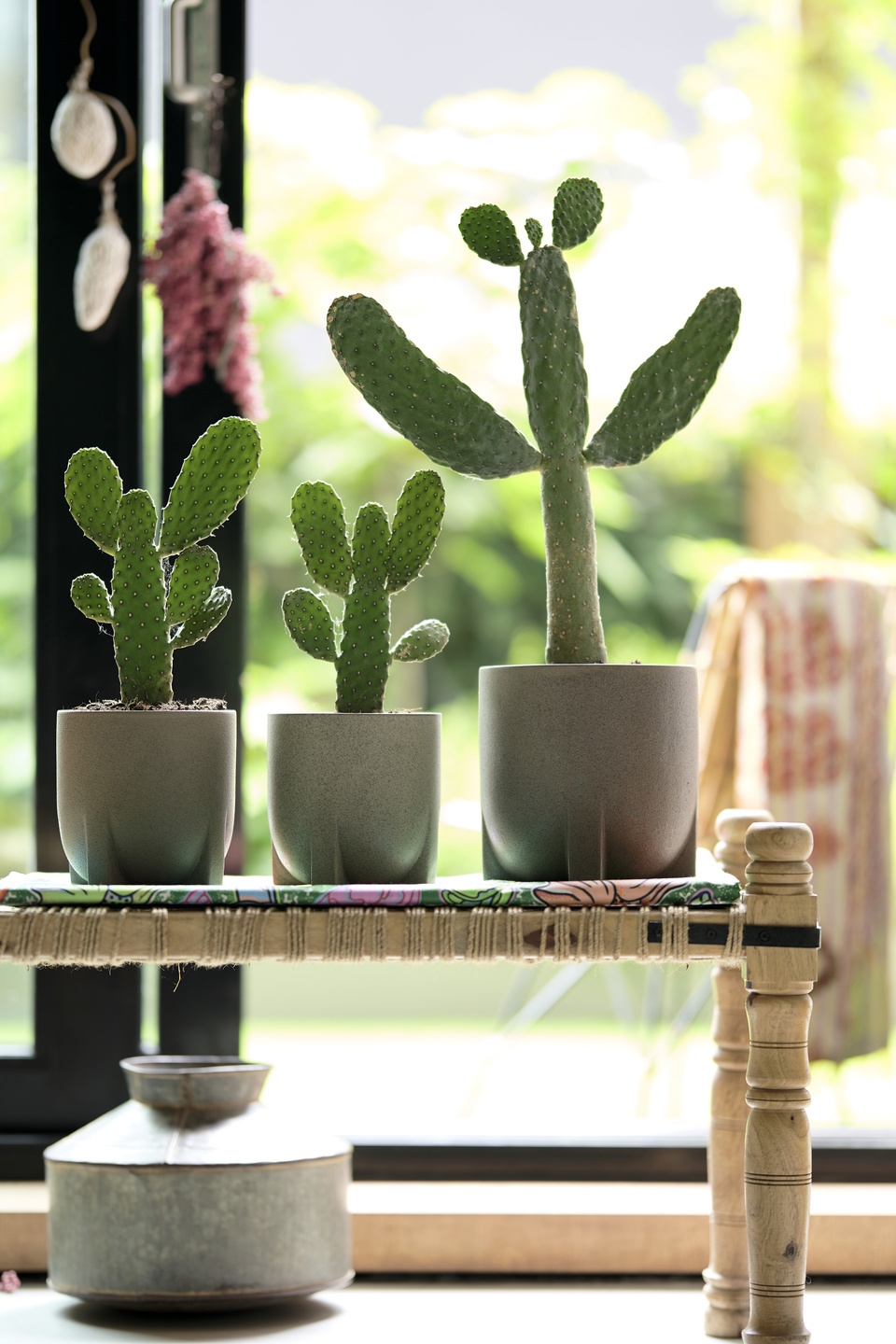 Cactus: houseplant of the month for august 2020