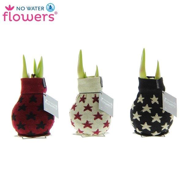 Amaryllis No Water Flowers® Fashionz Patterns