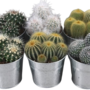 Cactus gemengd in Zinken pot
