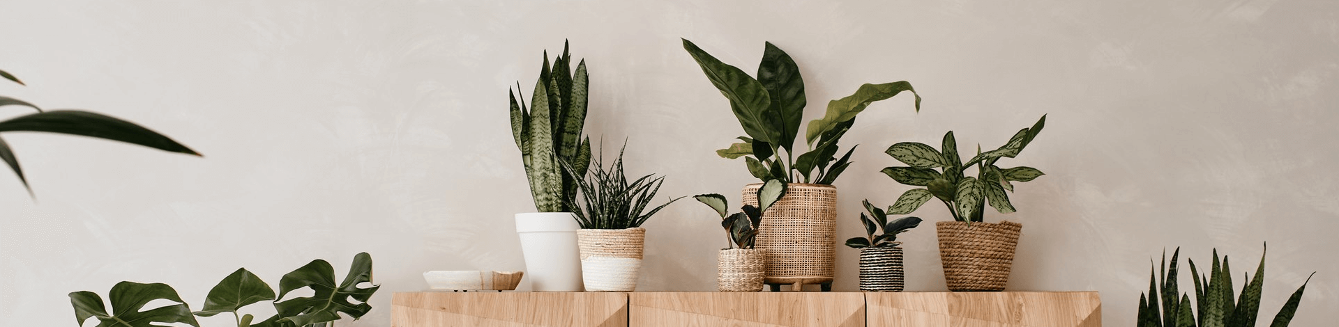 Find the most beautiful houseplants