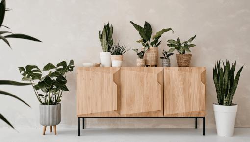 Achetez des plantes d'intérieur de qualité supérieure en ligne