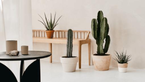 Eenvoudig uw cactus online bestellen
