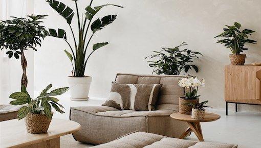 Planten per woonruimte