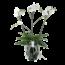 Phalaenopsis Theatro Classico 3spike
