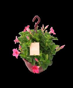 Sundaville - hanging pot
