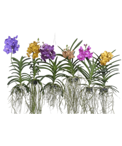Div colors speckled flowers