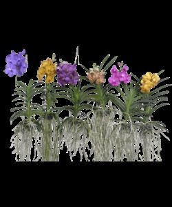 Div kleuren gespikkelde bloemen