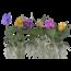 Vanda Div kleuren gespikkelde bloemen