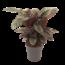 Calathea Ornata XL - Topf 27 cm