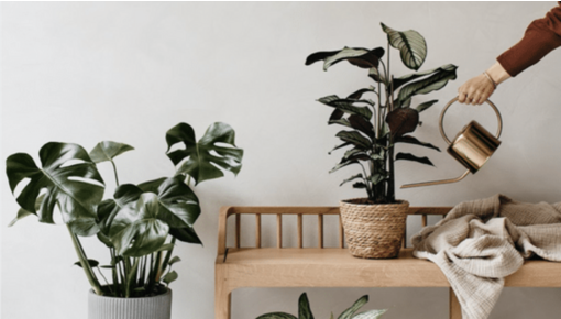 5 Tips to give your houseplants the best care.
