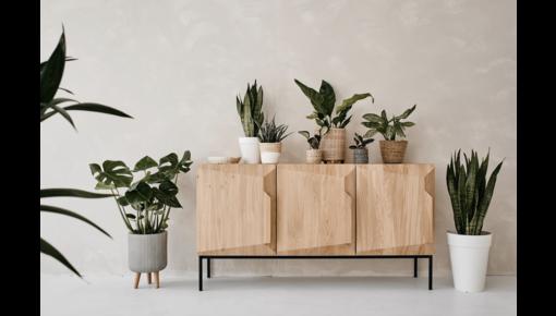 Die beste Pflege für Ihre Zimmerpflanzen