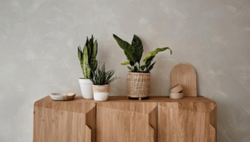 5 x Pflanzen mit spezieller Blattzeichnung