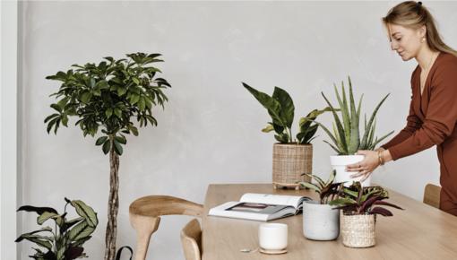 5 Tipps, um Ihre Zimmerpflanzen optimal zu pflegen.