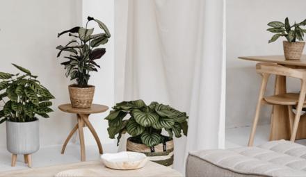 Réanimez votre plante