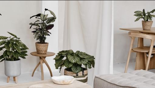 5 astuces pour redonner vie à vos plantes d'intérieur