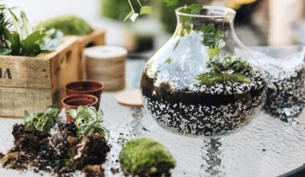 Terrarium végétal